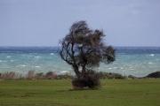 L__albero_strumento_a_fiato_del_vento.jpg