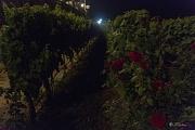 0602018_LOCOROTONDO__67_.jpg