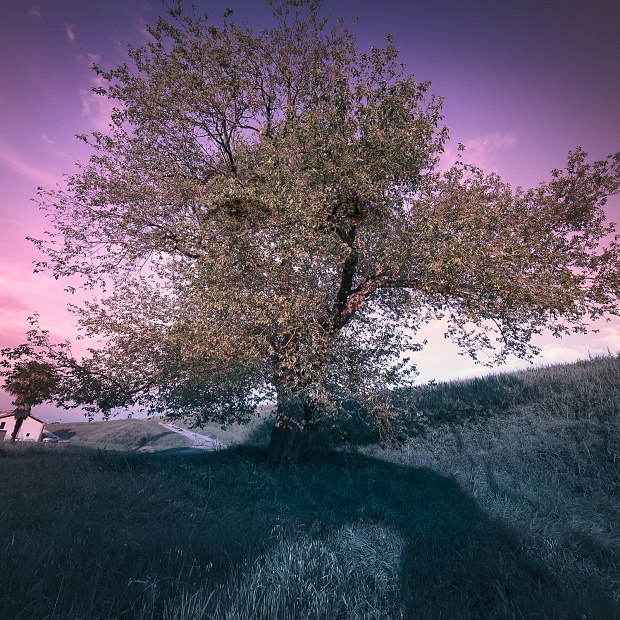 ... AS TREES CAN NOT FLY       (…  perché gli alberi non possono volare)