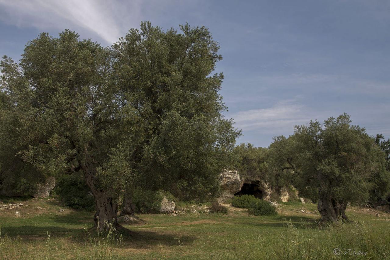 Il villaggio rupestre si articola in un insieme di grotte scavate dall'uomo lungo i fianchi della lama con forme e dimensioni variabili. La densità di tali ambienti è mutevole lungo il corso della lama e si alterna a gruppi di grotte ravvicinate e altre isolate. Molte di queste grotte - tuttora presenti - sono ancora oggi riconoscibili come abitazioni, per quanto, all'interno dell'insediamento, non ci fu mai una netta separazione fra usi residenziali e altri utilizzi, quali: l'allevamento o la trasformazione dei prodotti per uso domestico.