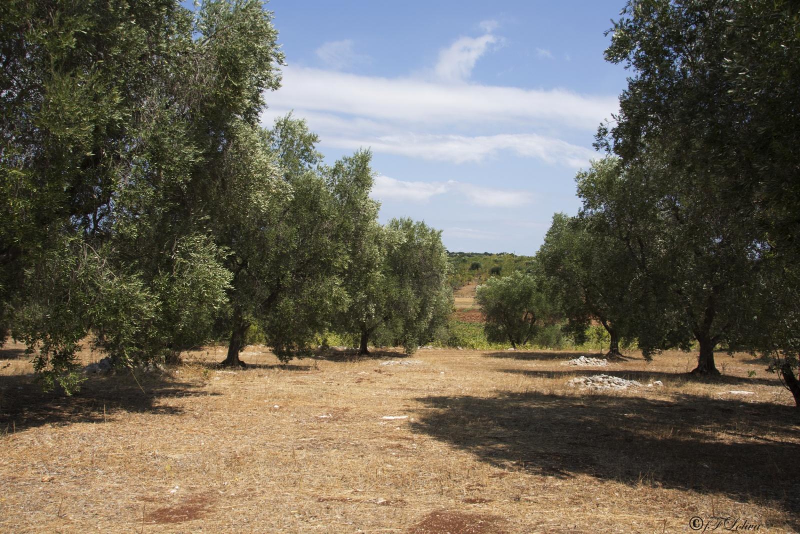 UN POMERIGGIO  IN CAMPAGNA ( Valle dItria)