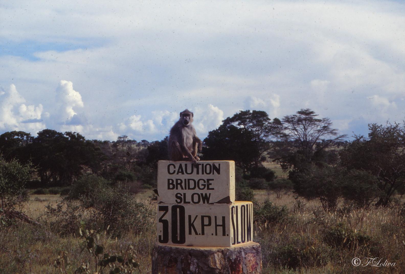 VECCHIE FOTO: KENIA LA SAVANA