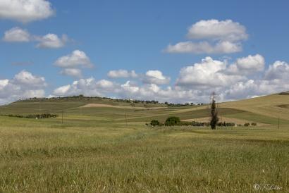 ALTA MURGIA -PAESAGGIO